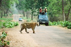 Photo for Viajes de Fauna En India